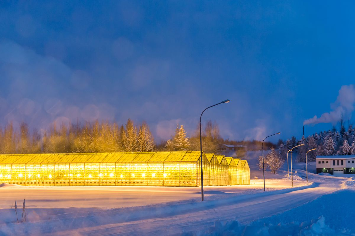 A geothermal-heated greenhouse in Iceland.