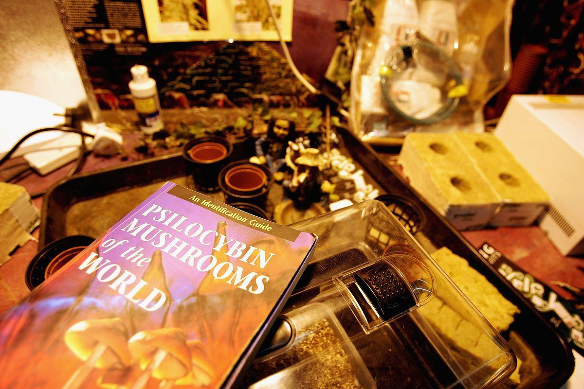 Freshly Picked Magic Mushrooms Reclassififed As Class A Drug In UK