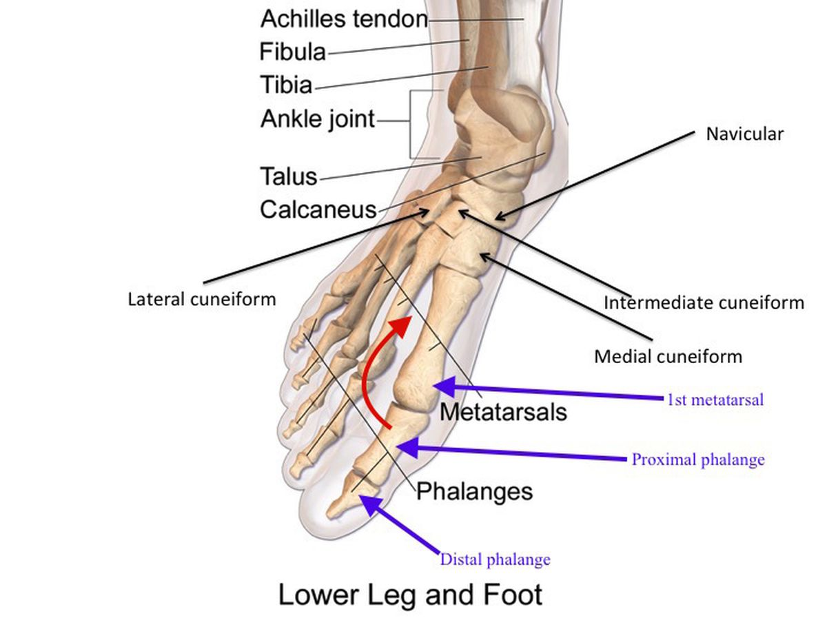Examining the Irish: Ankle Fractures - One Foot Down