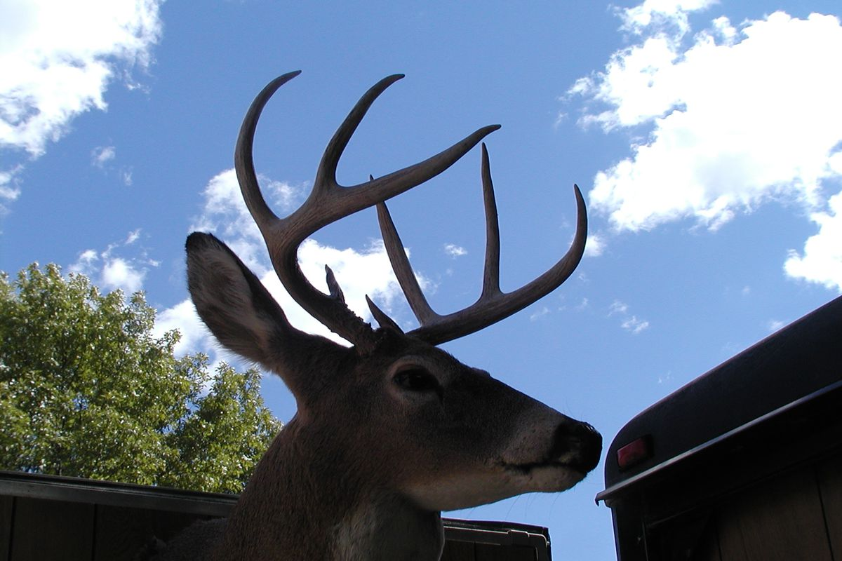 File photo of a mounted deer head against the sky. Credit: Dale Bowman