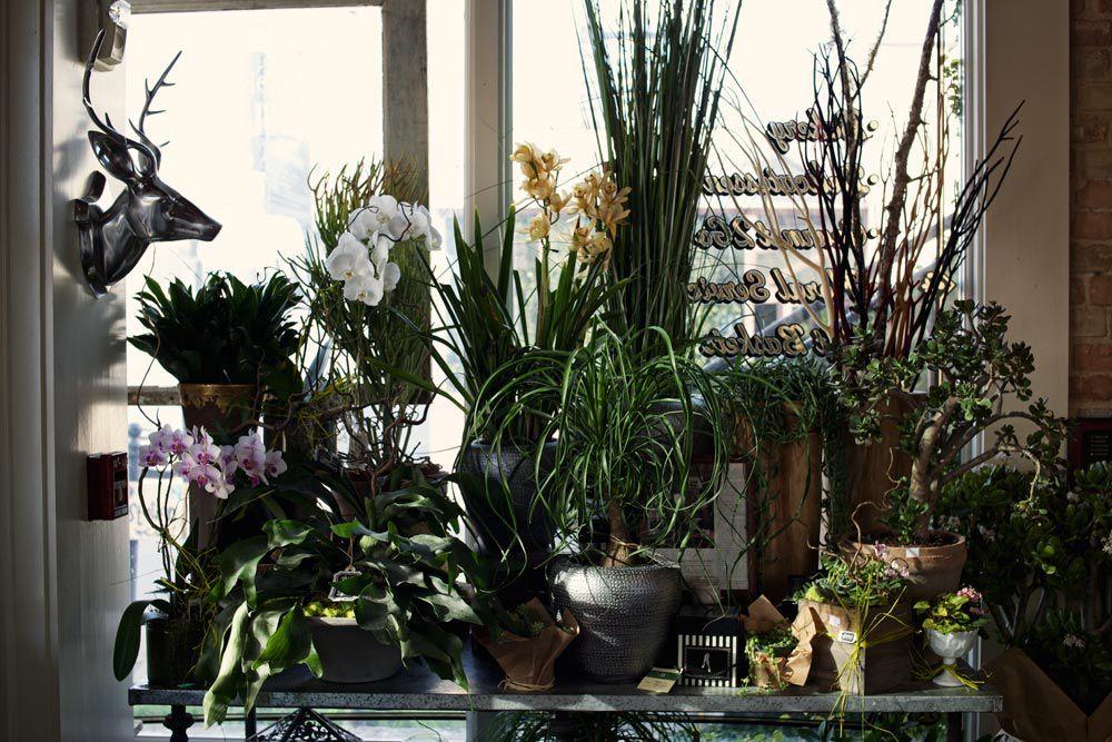 Plants at Walton's