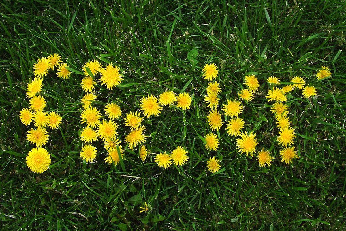 flickr flowers