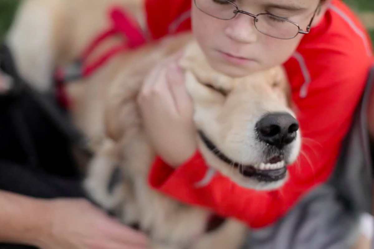 Dogecoin community raises money to send service dogs to ...