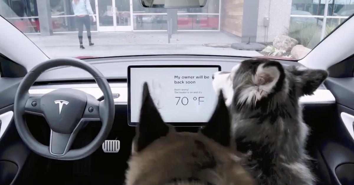 Tesla Fixed its Dangerous 'Dog Mode' Bug