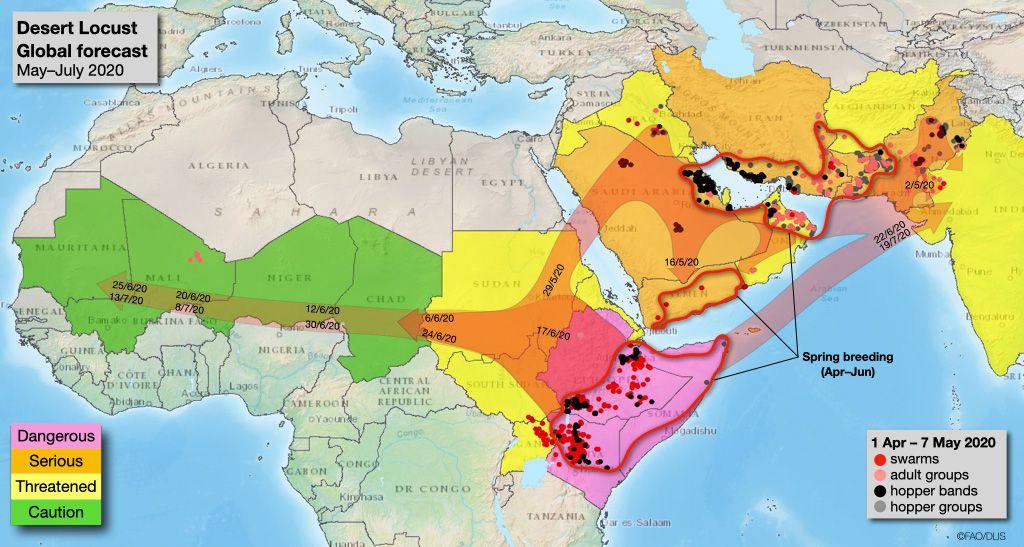 Desert locust swarm forecast map for summer 2020