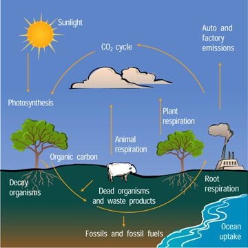 carboncycle_sm Sucking CO2 out of the atmosphere, explained