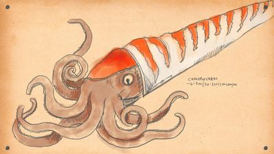 Conetapus - Here are 9 of the most badass animals ever to swim