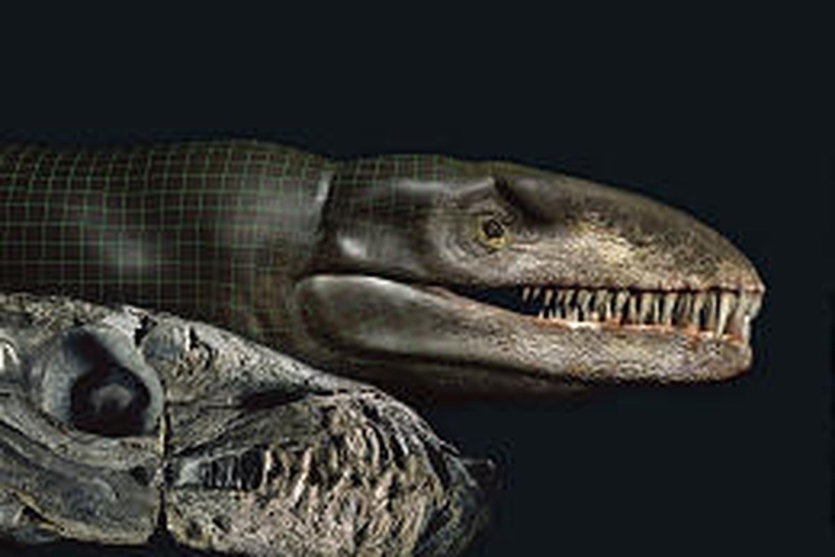 The skull fossil of a Dakosaurus andiniensis, known as Godzilla, left, found in Argentina, and a digitized model of the marine crocodile, right.