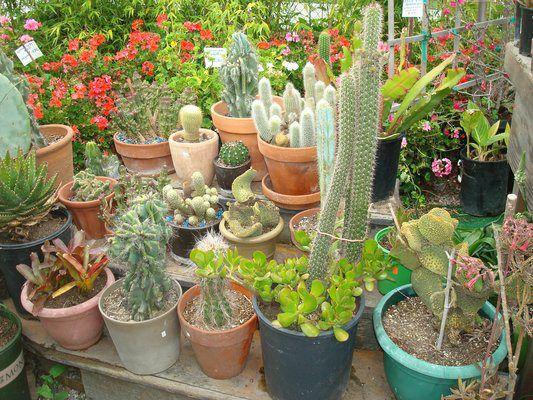 Nurseries For Stylish Plant Life