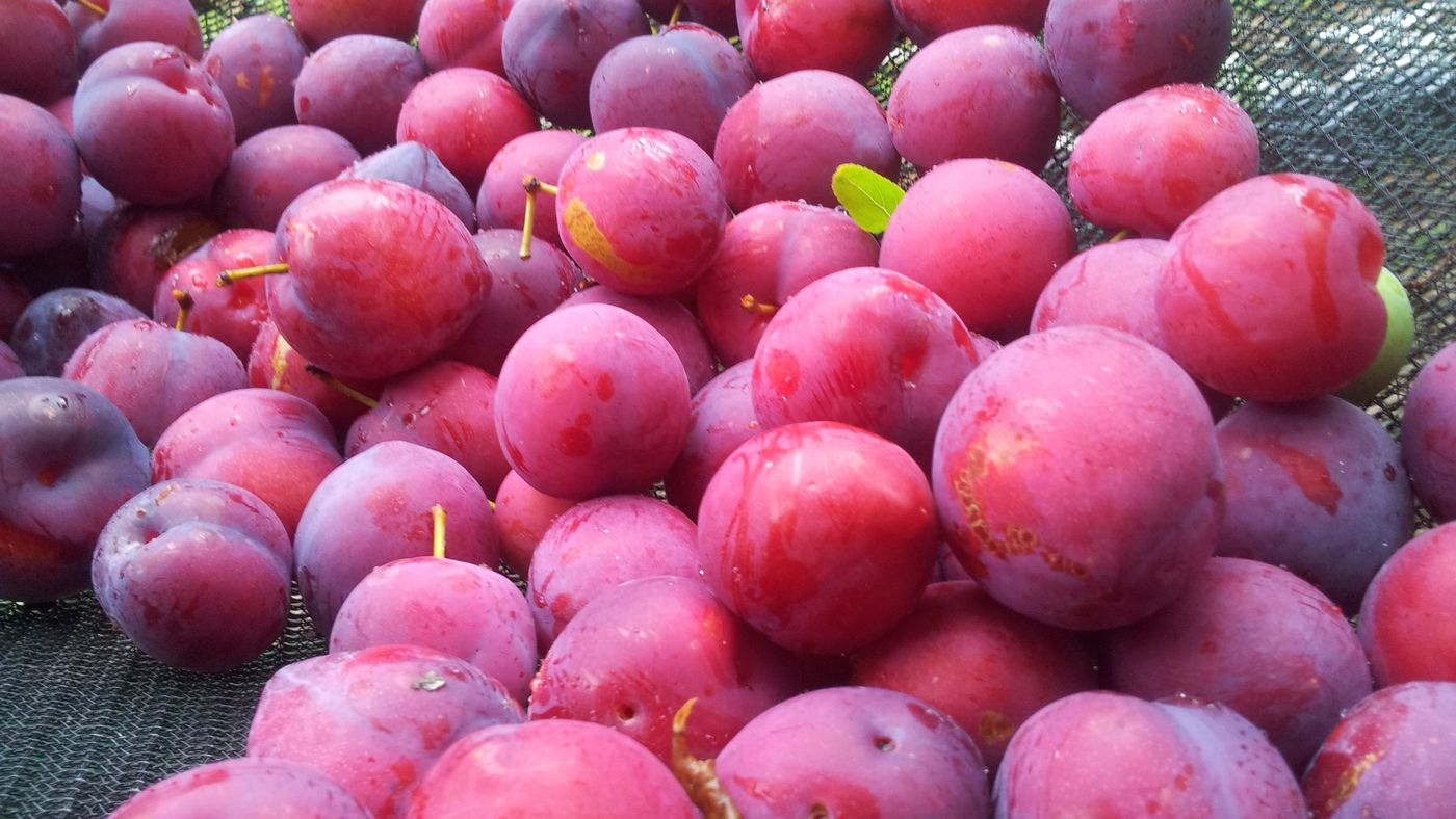 plums burning de grăsime