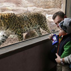 Andrew Leatham and his son, Sean, watch an Amur leopard in the Asian Highlands exhibit at Hogle Zoo on Jan 3, 2007.