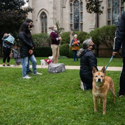 Spice, right, looks at the camera during a pet blessing ceremony in celebration of the feast day of St. Francis of Assisi.
