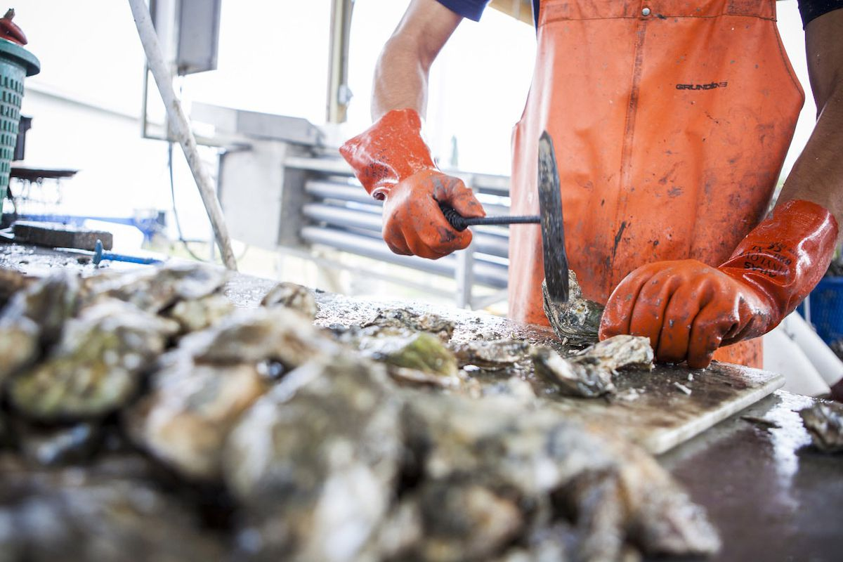 St. Jude Farms' Oysters
