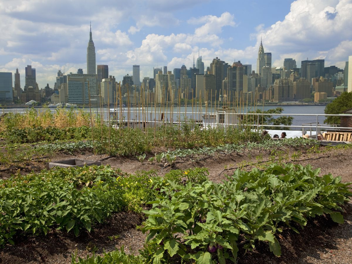 New York City S Best Urban Farms Brooklyn Grange And More Curbed Ny