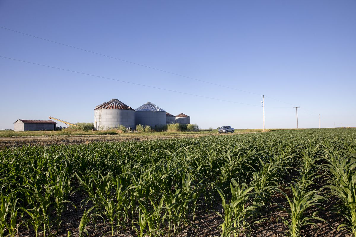 Better Weather Cools Crop Rally As Corn And Oilseeds Sink