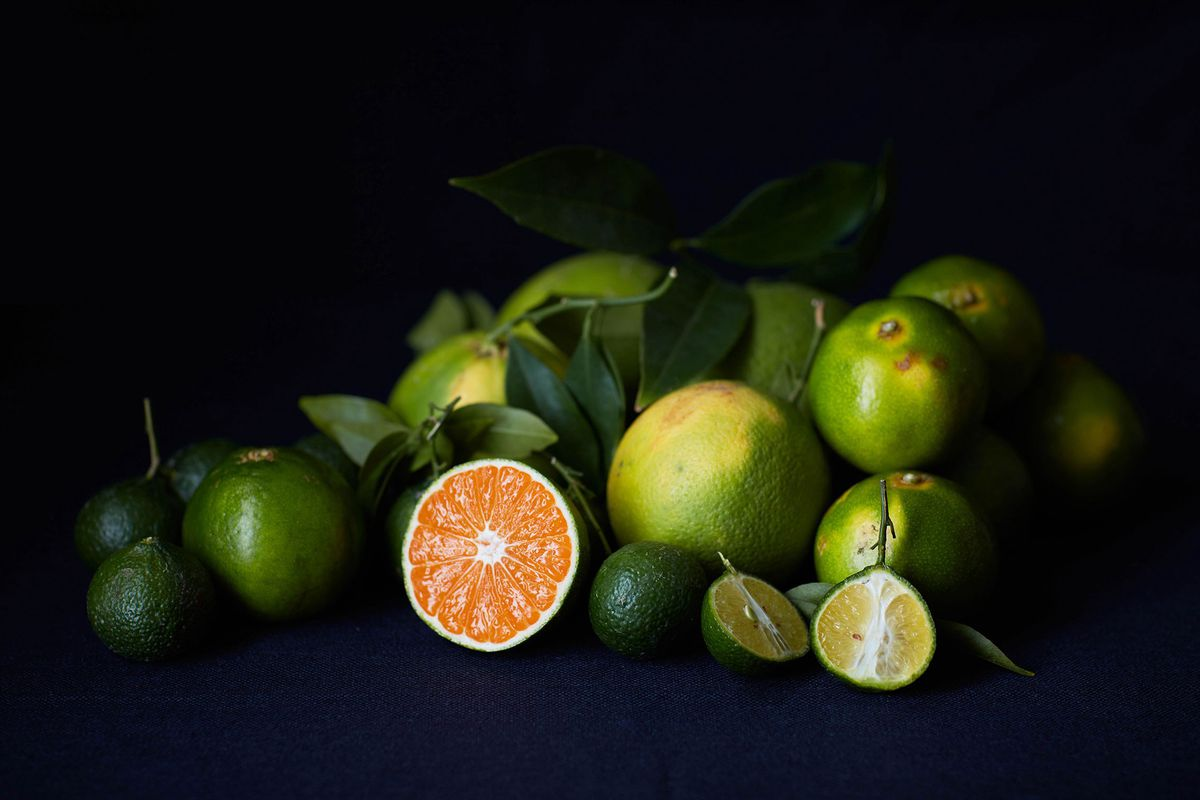 Green citrus fruits on a black background
