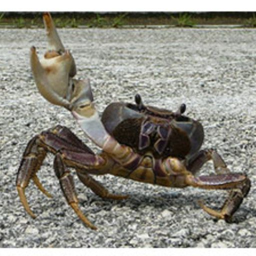 CrabbyCrabberson