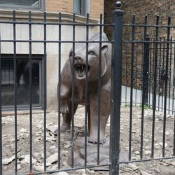 """6:03 p.m. Bear statue still on display in front of the """"EAMUS CATULI"""" building -"""