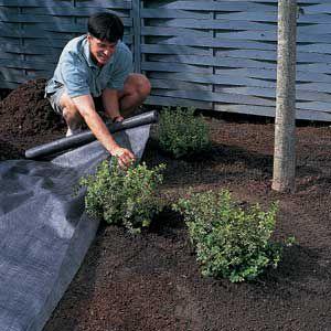 Man Spreads Landscape Fabric Around Plants