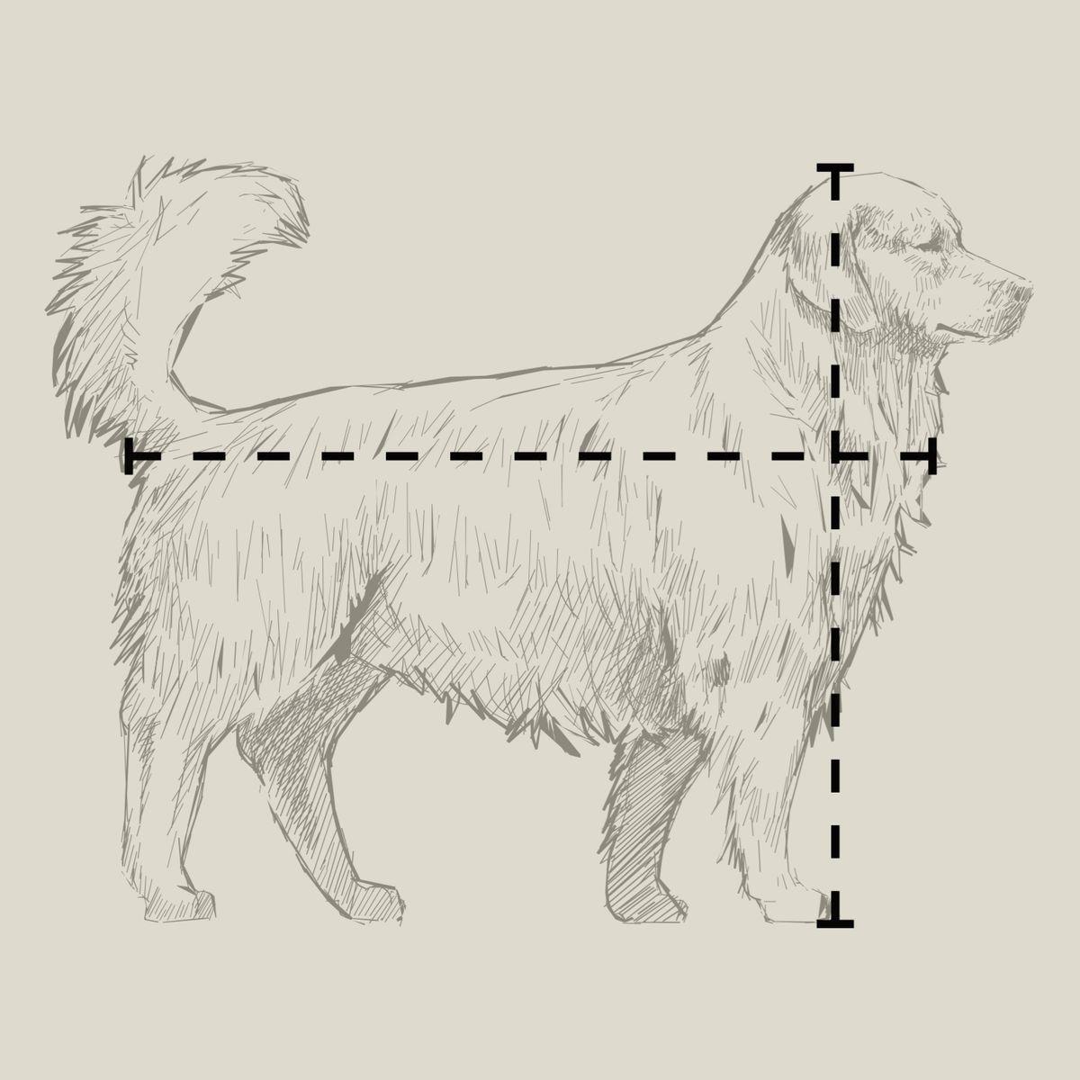 Spring 2021, Animal House, dog illustration