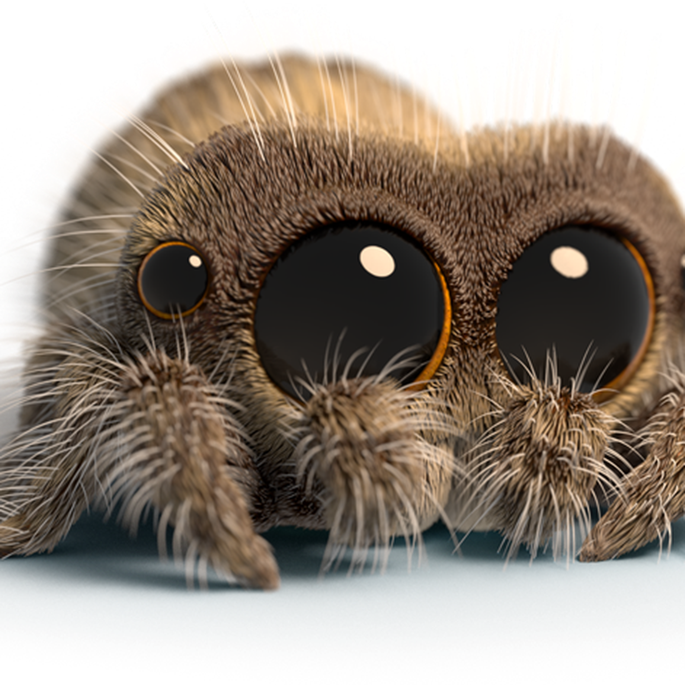 Youtube S Favorite Creature Lucas The Spider Is Getting An