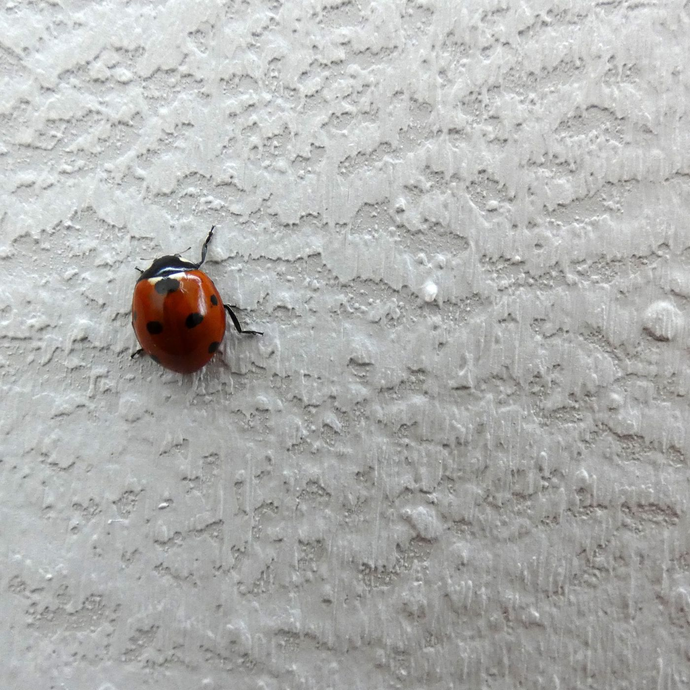 How To Get Rid Of Ladybugs This Old House