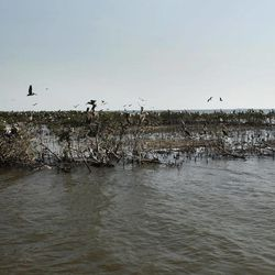 The edge of Cat Island, which has eroded heavily since the Deepwater Horizon oil spill, is seen in Barataria Bay in Plaquemines Parish, La., Wednesday, April 11, 2012.