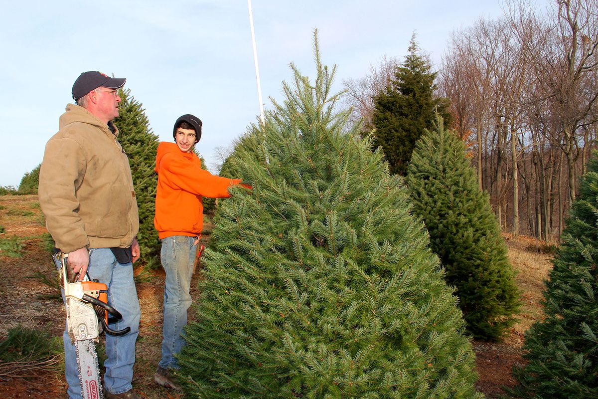 we know were never gonna get rich doing it he says but at christmas time when you watch all these families come out and the kids running around the - How Many Christmas Trees Per Acre