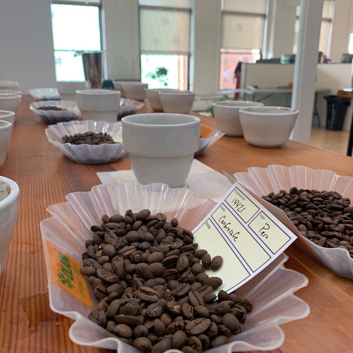 A cupping setup to test roasted coffee beans, night shift roasting