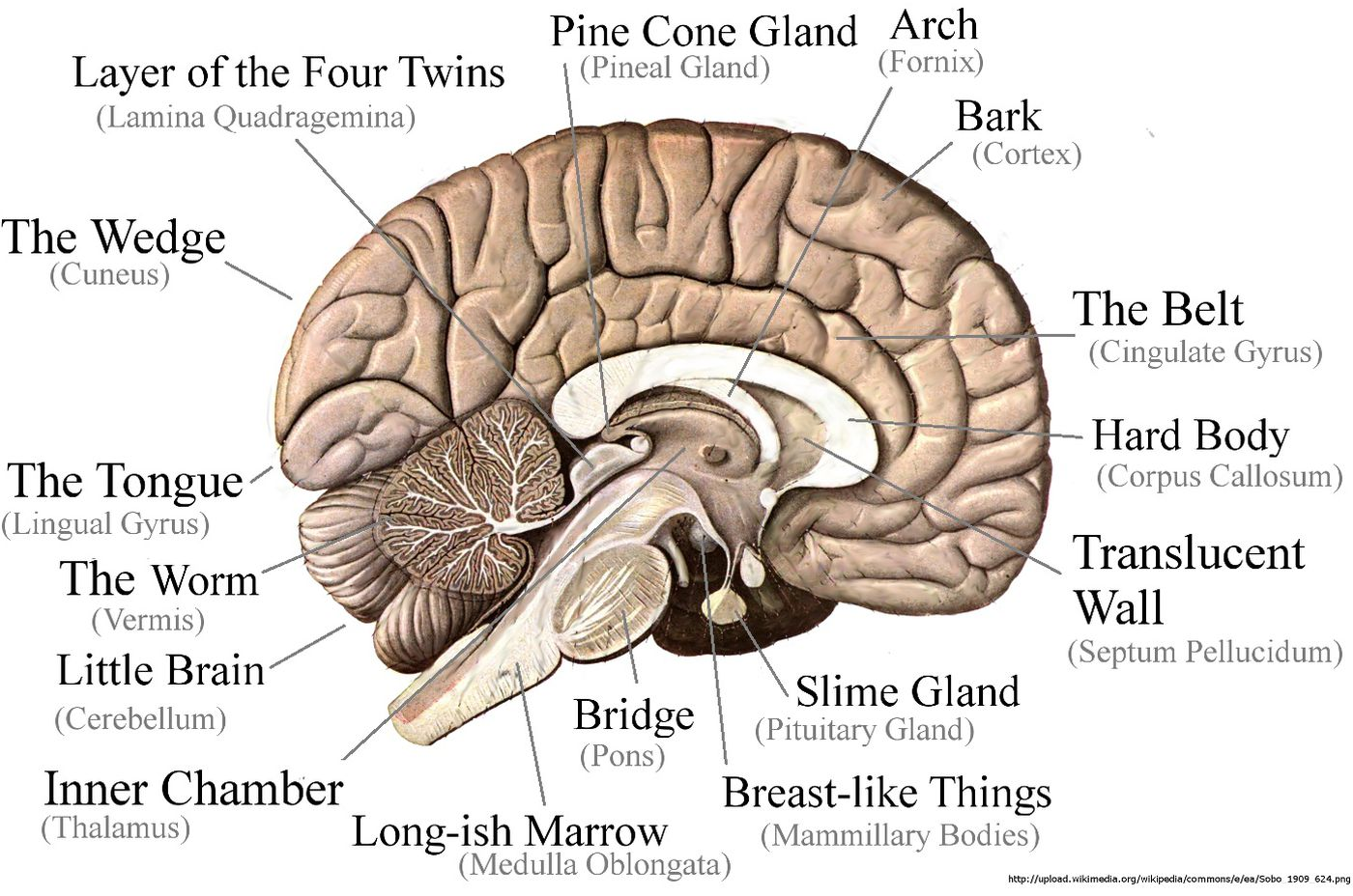 Download 936hz Pineal Gland Activator Wiki free - tubekings