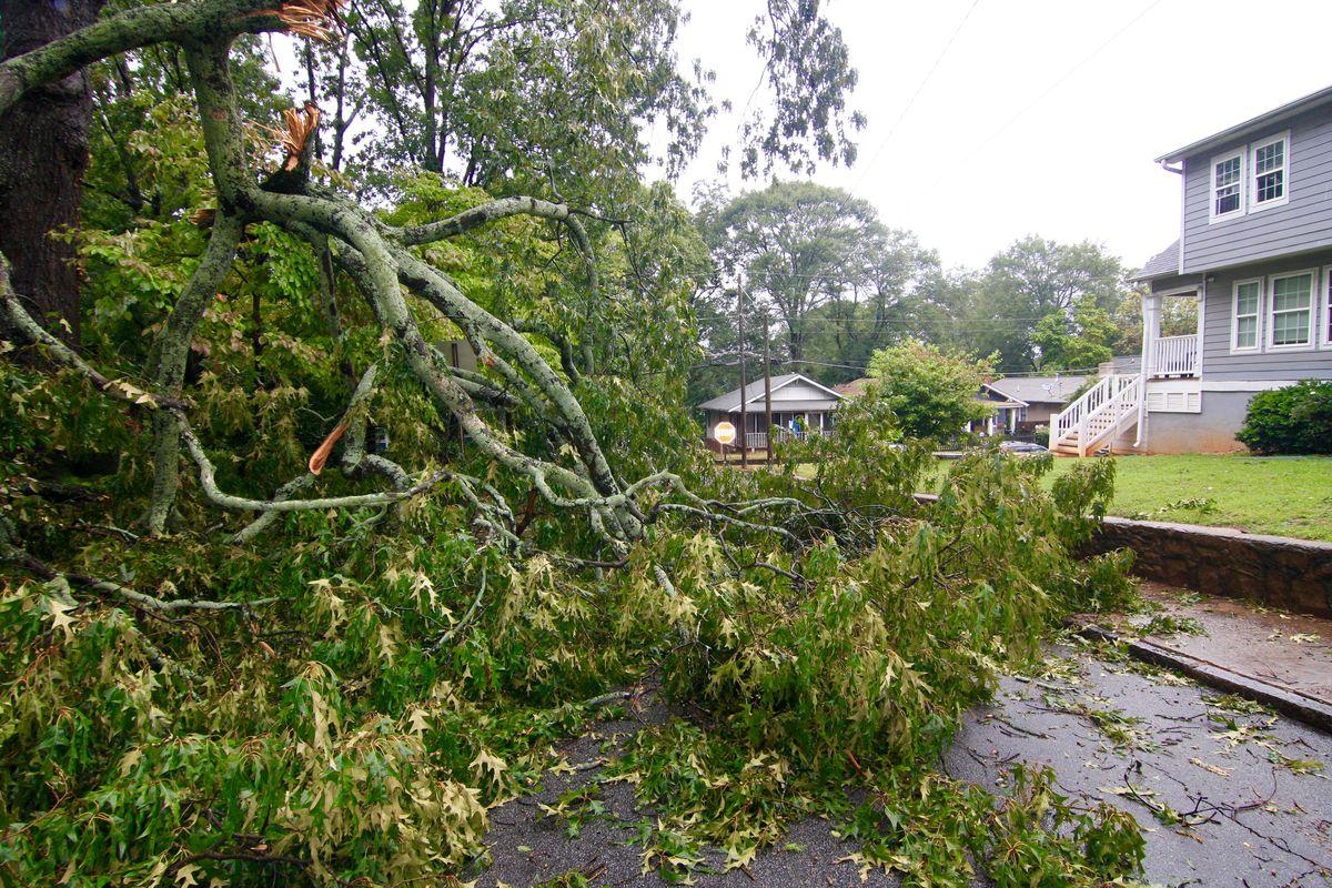 A tree down, blocking a road.