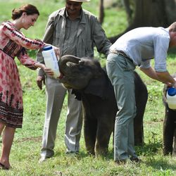Kate lived out your personal dream and fed baby elephants and rhinos, all while wearing a surprisingly affordable $140 dress from Topshop.