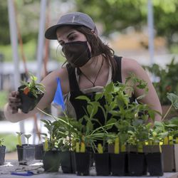 Madison Denkers, Wasatch Community Gardens board member, does quality control on customer orders at Wasatch Community Gardens' Green Phoenix Farm in Salt Lake City on Tuesday, May 5, 2020.