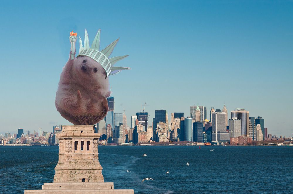11 Celebratory Reddit Photoshops Of The Cheering Hedgehog