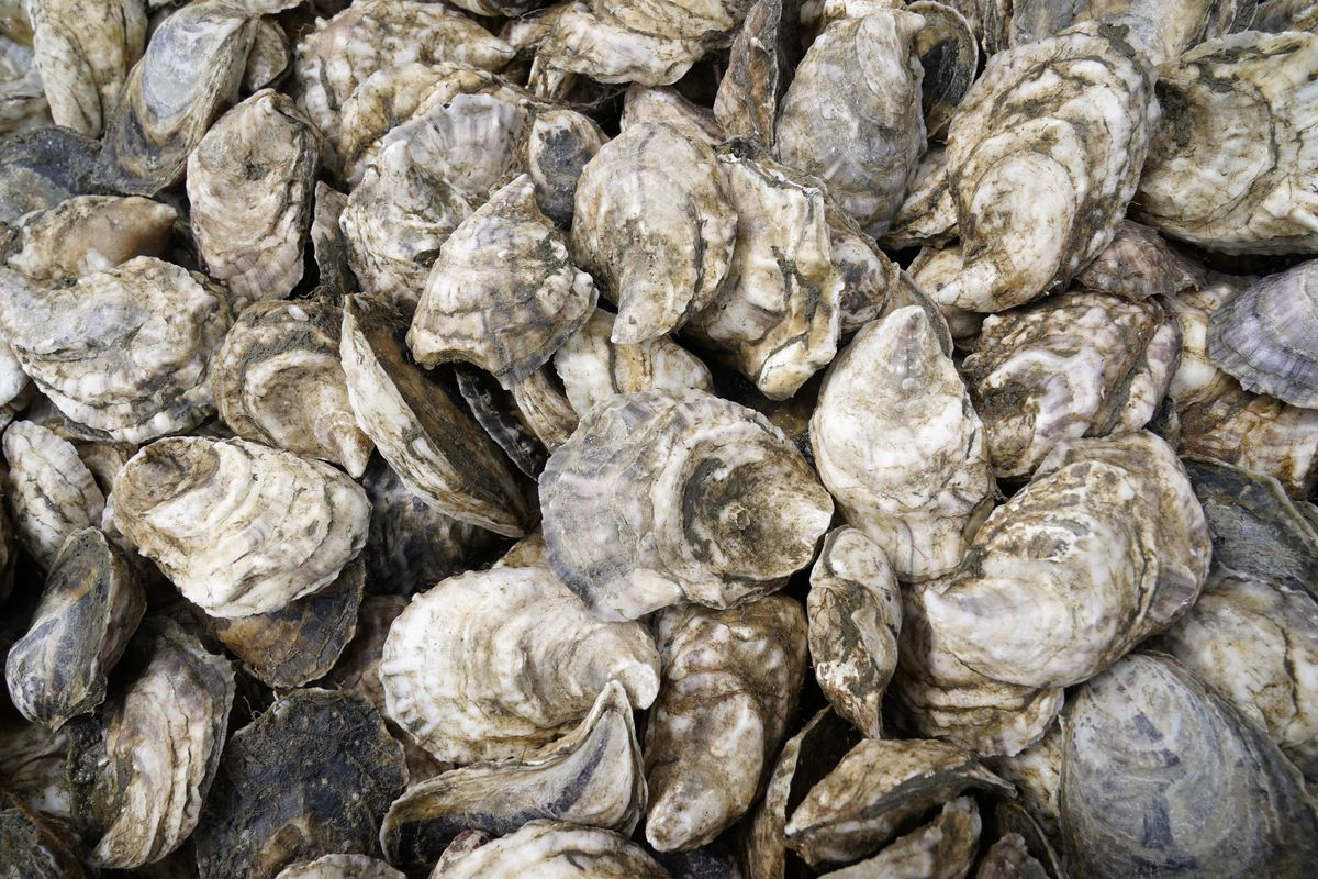 Oyster are collected in a crate.