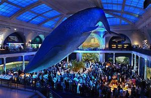 Dinosaur Buffs And Posh Bridezillas Will Definitely Agree On One Thing The American Museum Of Natural History Is An Uh Mazing Place To Hold A Wedding