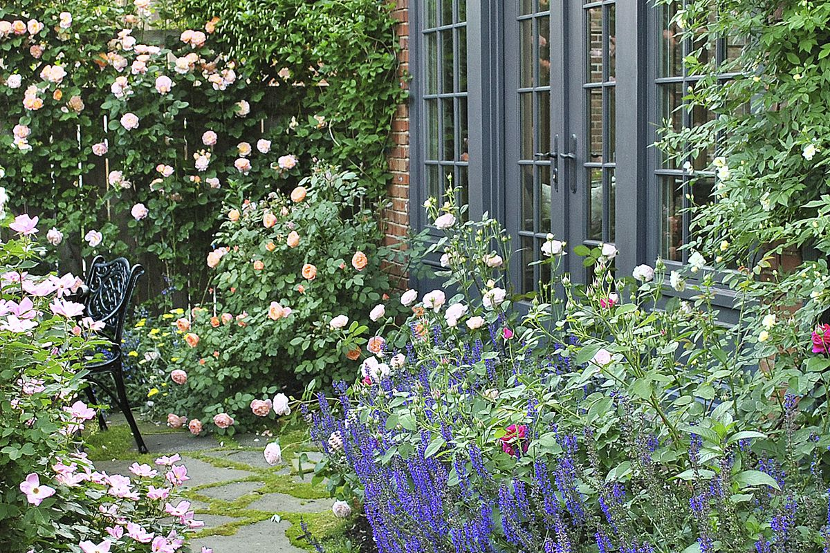 From Blah Lawn To Backyard Rose Garden Paradise This Old House