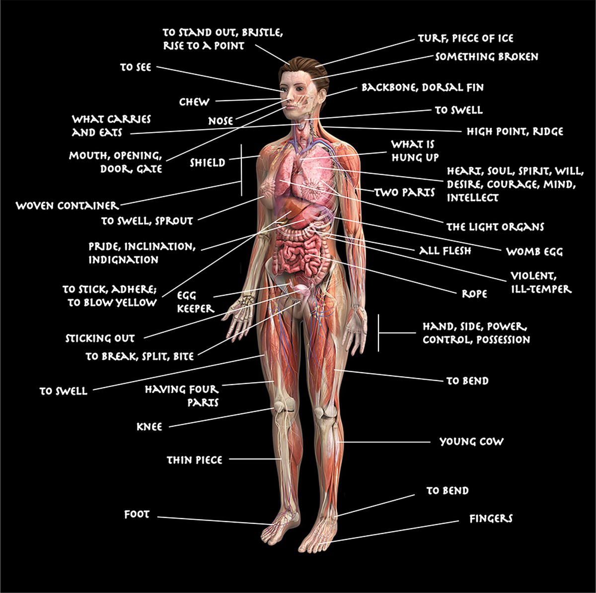 Human Body Anatomy Diagram