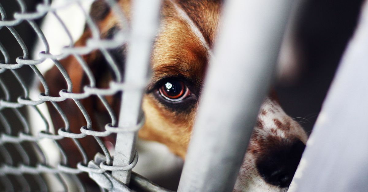 A bill on President Trumps desk would make animal cruelty a federal crime