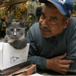 """Cat and bodega owner hanging out in the Bronx via <a href=""""http://www.flickr.com/photos/fotoflow/4561184290/in/pool-893922@N22/"""">fotoflow</a>/Flickr"""