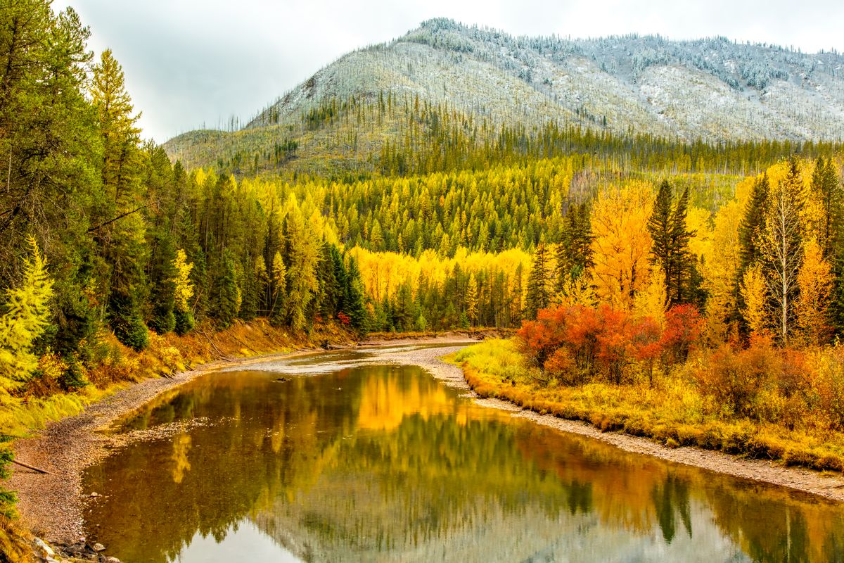 A mountain vista of yellow aspen trees, green pine trees, and red bushes reflecting in a serene river of water.
