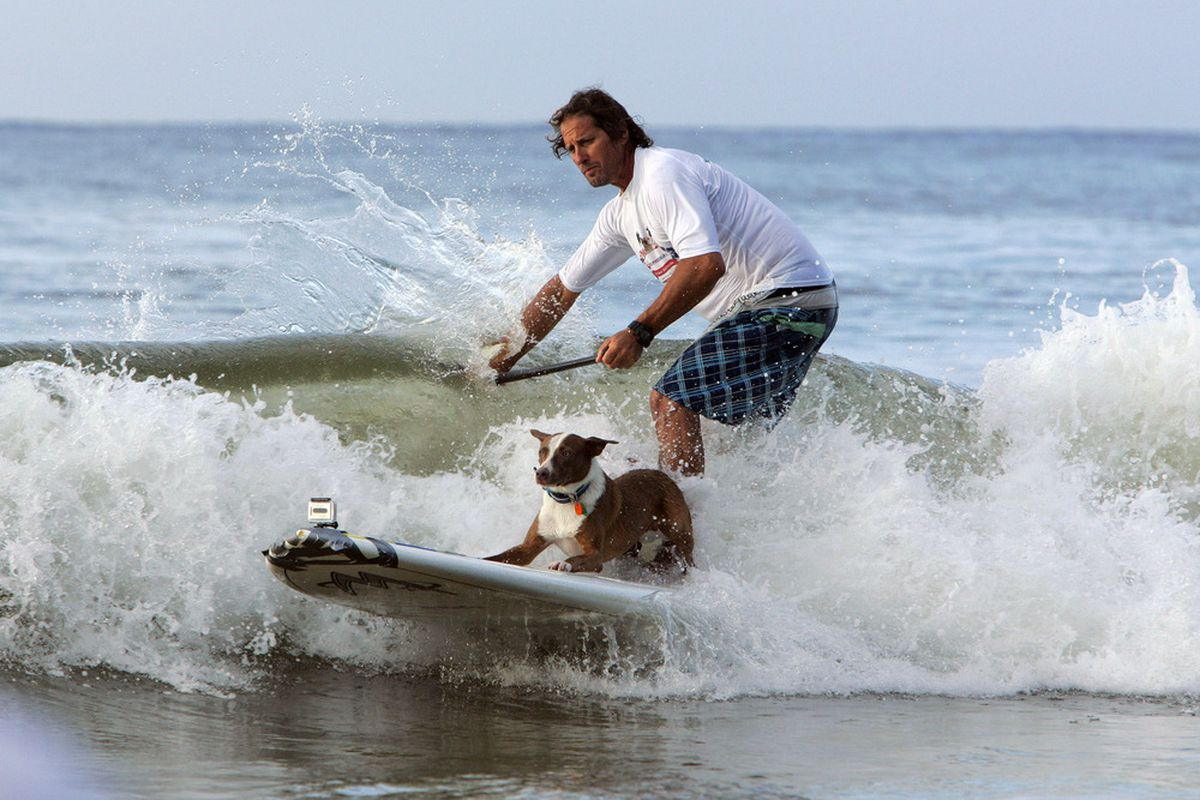 Chris De Aboitiz rides a wave with his surf dog during the Surfing Dog Spectacular on March 12, 2012 at Noosa beach in Queensland, Australia.