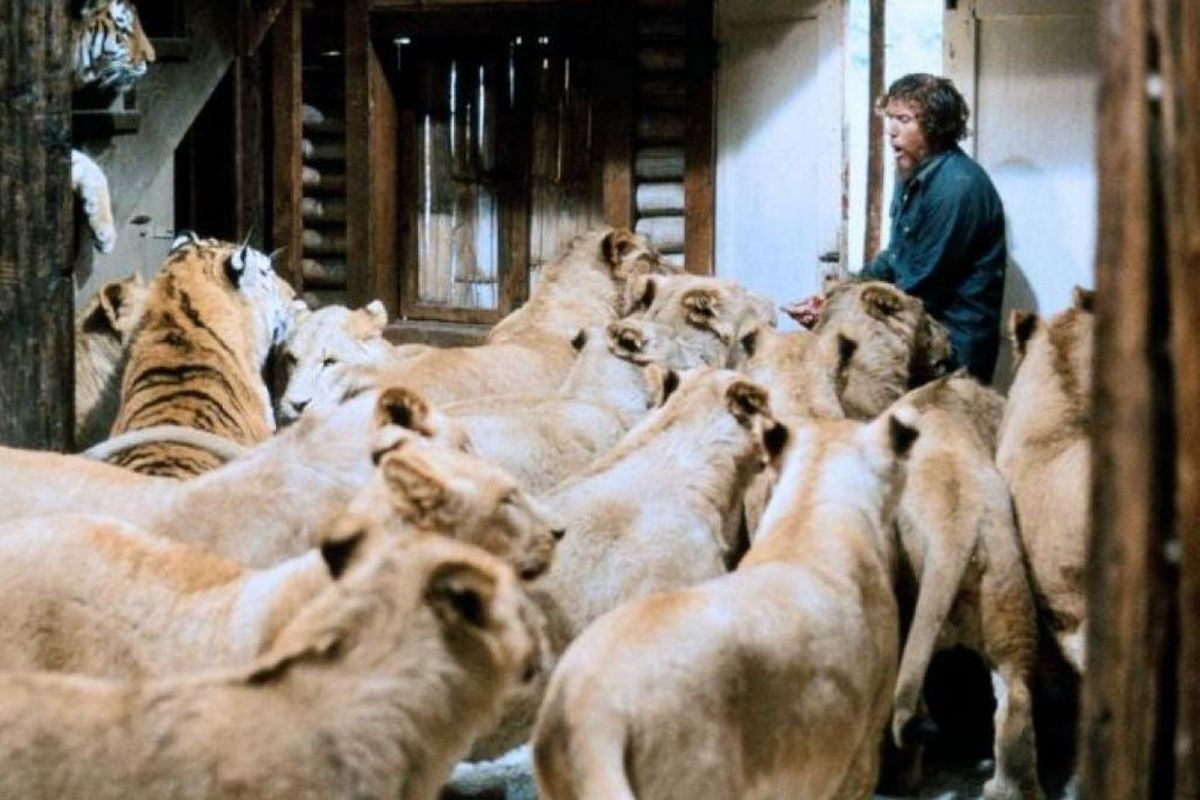roar 1981: lions hound Noel Marshall