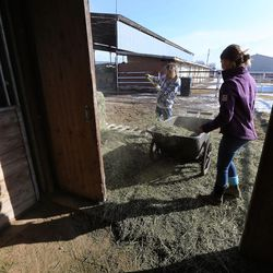 John Jude and Carly Hughes get feed for horses at the Salt Lake County Equestrian Park and Event Center in South Jordan on Monday, Feb. 8, 2016.