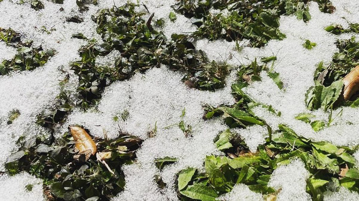 Green vegetables covered with ice after a snow storm