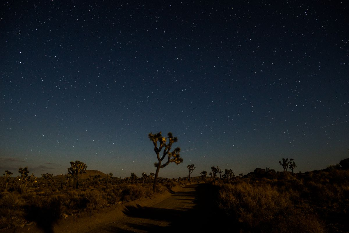 Rocks and fuzzy tree-like cactuses pepper the desert floor at night. The sky is dark blue and hundreds of stars are visible.