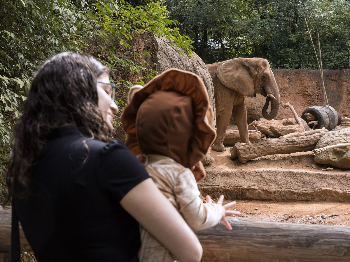 A woman holds up a young child. The child is looking at an elephant in a zoo habitat.