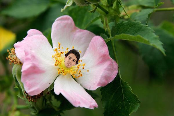Wild rose Gaudreau