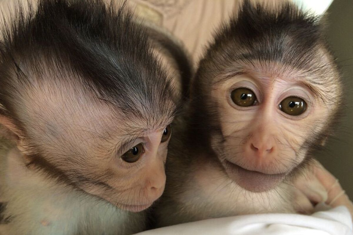 Enter the Primate World: Habitat of Monkeys and Where They
