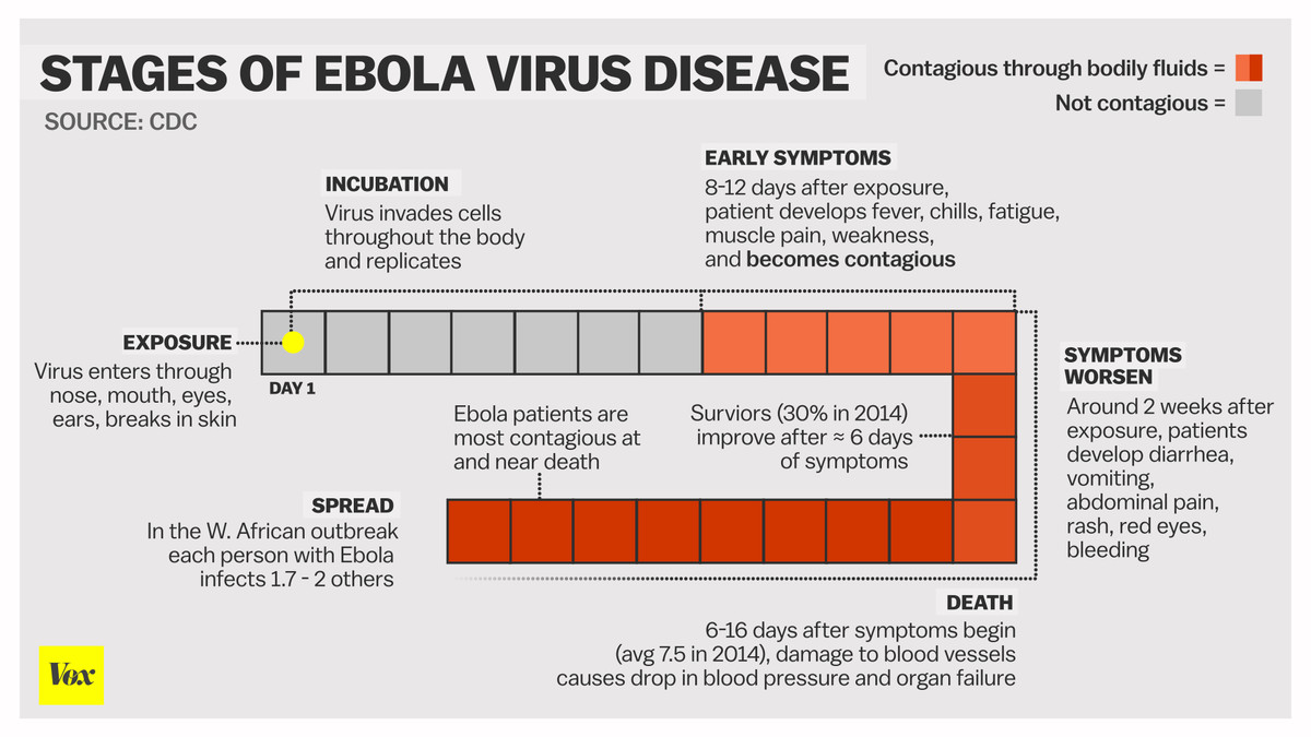 ebola stages